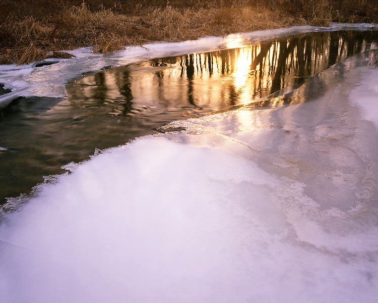 Winter sunset light on a stream at The Morton Arboretum; Lisle, IL