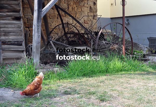 Huhn vor altem Bauernhof, Haupstr. 3, mit landwirtschaftlichem Gerät
