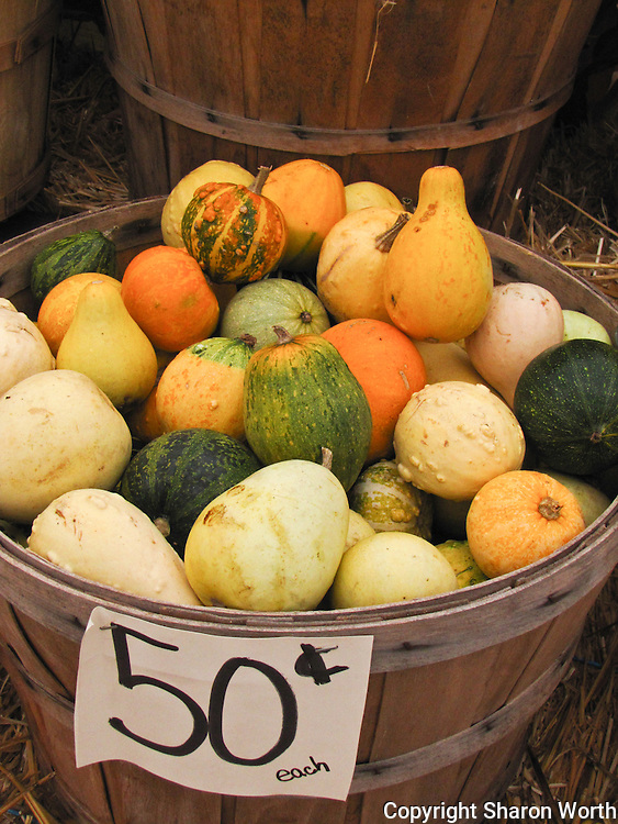 A basket full of gourds for sale to help decorate and celebrate fall and Halloween.