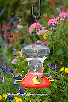 01162-12603 Ruby-throated Hummingbirds (Archilochus colubris) at feeder near flower garden,  Marion Co.  IL