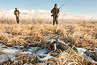 Hunters retrieve a mallard while hunting near Dillon, Montana.