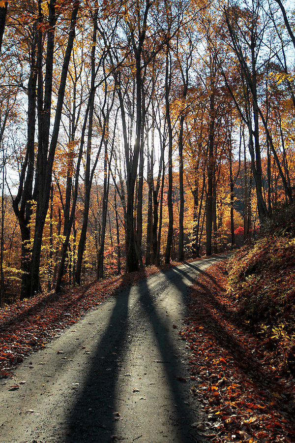 Sunlight creates shadows thru the trees on a dirt road in Madison County, VA.  Photo/Andrew Shurtleff