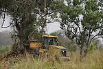 ETHIOPIA Gambela, Pukong, ethiopian government is leasing large farm land to investors for farming of cotton and maize, deforestation of bush forest / AETHIOPIEN Gambella, die aethiopische Regierung verpachtet grosse Landflaechen an Investoren, Abholzung von Buschwald