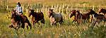 Cowboy Photography Workshop   Erickson Cattle Co. ..Andra Erickson  leads horses from back pasture... Photo by Al Golub/Golub Photography