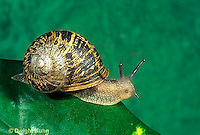 Snails, Slugs, Mollusks