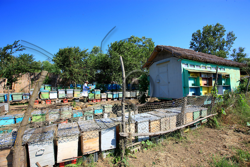 Romanian's migrants beekeepers