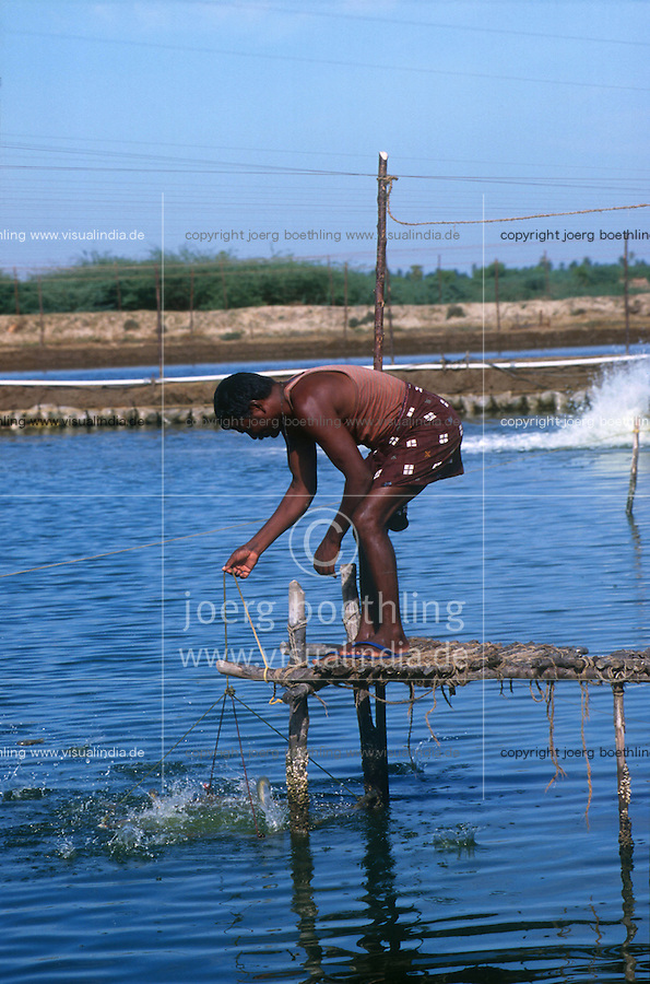 INDIA Tamil Nadu Nagapattinam, shrimp farm for export, negative effects: breeding with antibiotics and fertilizer, salinization and loss of agricultural land for food crops / INDIEN, Garnelenzucht fuer den Export, negative Effekte Versalzung, Verlust landwirtschaftlicher Flaechen fuer Nahrungsanbau, massiver Einsatz von Antibiotika und Wachstumshormonen