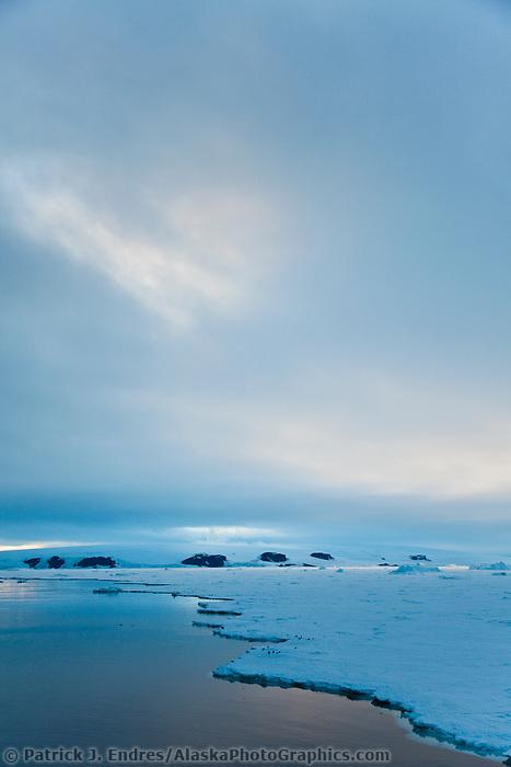 Adelie penguin hauled out on the land fast ice near Paulet Island, Antarctic Peninsula.