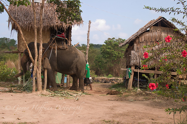 Asian elephant and traditonal huts on stilts. Koh Lanta, Thailand