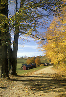 Lovely fall day on road above Windsor Vermont with yllow gold foliage