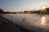 Wild ducks swim in thermal water lake