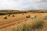 Stock image - Hay bales lying on a ploughed farm in Cyprus.