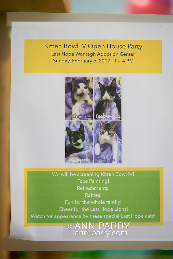 Wantagh, New York, USA. February 5, 2017.  Flyer for Kitten Bowl IV Open House Party at Last Hope Animal Rescue is on display during its Open House for Hallmark Channel's Kitten Bowl IV. Kittens in its Last Hope Lions team played against kittens in North Shore Bengals team. Last Hope kittens have been part of each Kitten Bowl, and its purpose is to promote cat and kitten adoptions.