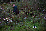 A club official trying to locate lost balls outside the ground during half-time in the SPFL League 2 encounter between Annan Athletic and Edinburgh City. The match ended in a 1-1 draw, watched by 351 spectators. City were still without a League win in the new season.