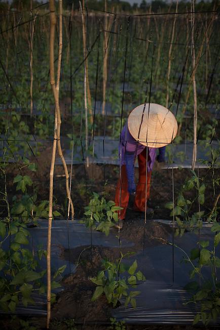 Vietnamese women work in the fields outside of Ho Chi Minh City, Vietnam.