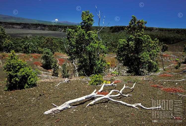 Devastation trail at the Hawaii Volcanoes National Park