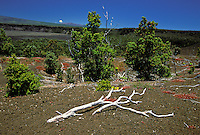 Devastation trail at the Hawaii Volcanoes National Park