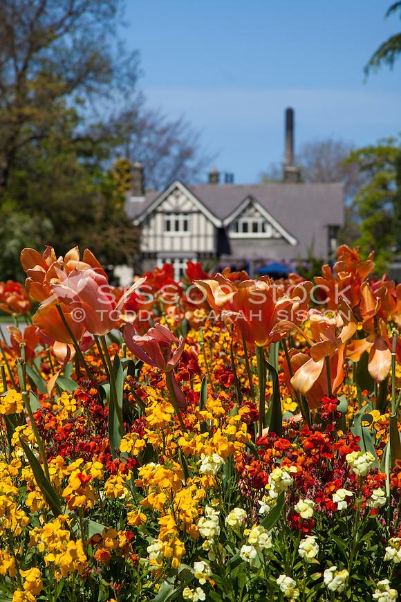 lowers Christchurch Botanical Gardens,New Zealand - stock photo, canvas, fine art print
