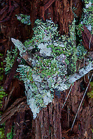 Fallen Tree and Lichens, Shaw Island, Washington, US