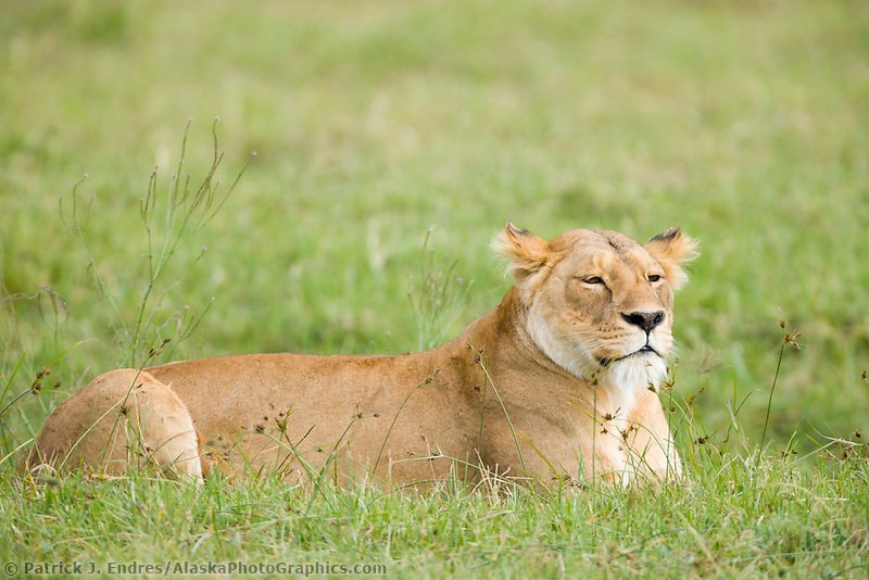 Ngnorongoro National Park, Tanzania, East Africa