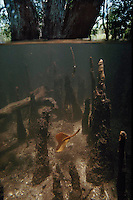 Rainforest-Mangrove forest 42x63, full frame/ plexiglas laminated, limited series 10
