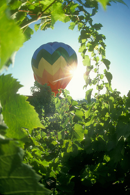 Balloon launch in Yountville