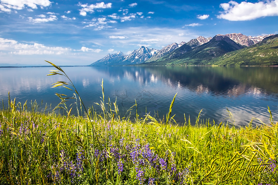 Jackson Lake reflecting the Grand Teton Range in its calm waters in Grand Teton National Park.<br /> <br /> For production prints or stock photos click the Purchase Print/License Photo Button in upper Right; for Fine Art &quot;Custom Prints&quot; contact Daryl - 208-709-3250 or dh@greater-yellowstone.com