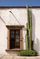 Window and organ cactus in the 19th century mining town of Mineral de Pozos, Guanajuato, Mexico.