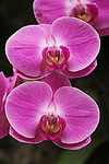 NYBG Orchid Show 4-1-13