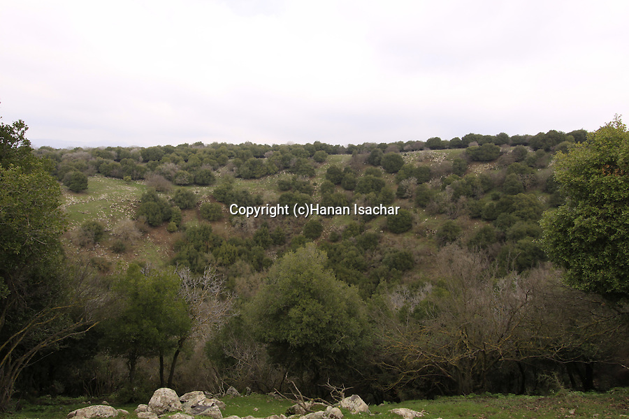 Golan Heights, the Large Juba in Odem Forest