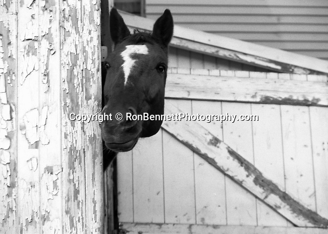 Horse peeks around barn door, Horses graze, Curious colts, colts, wild horse, Horse, ponies, mares, stallion, saddle, Equus ferus caballus, domestic horse, yearling, colt, filly, gelding, pony, thoroughbred,Animal, wild animals, domestic animals,  Fine Art Photography, Ron Bennett Photography ©, Fine Art Photography by Ron Bennett, Fine Art, Fine Art photography, Art Photography, Copyright RonBennettPhotography.com ©