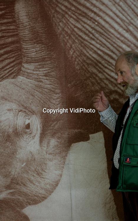 Foto: VidiPhoto..AMERSFOORT - Zoo-manager Mario Hoedemaker van Dierenpark Amersfoort bij de foto van een vorige geboorte van olifant Indra. Afgelopen nacht doodde zij samen met moeder Kine War War haar zojuist geboren jong, waar door het dierenpark zo lang naar was uitgezien. Een olifantengeboorte is vaak pijnlijk voor de moeder en hierdoor kan bij haar agressie ontstaan. In deze agressie kan de moeder het kalf doden. Dit is ook gebeurd in DierenPark Amersfoort.