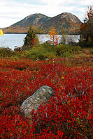 Autumn Blueberry Bushes at Jordan Pond  #A33