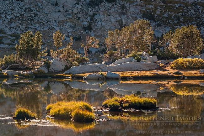 Backlit trees at sunrise at Vogelsang Lake, Yosemite National Park, California