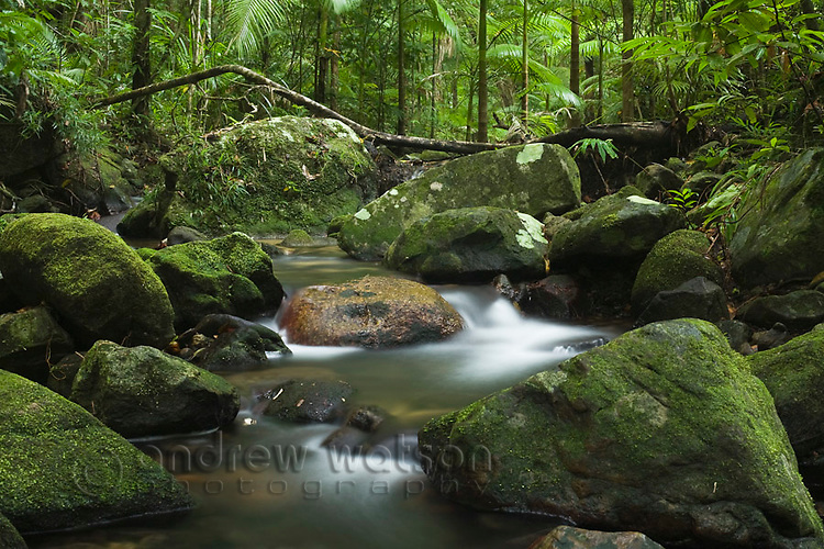 Rainforest stream at Mossman Gorge in the Daintree National Park.  Mossman, Queensland, Australia