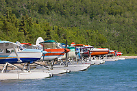 Bush planes on floats that transport tourists to Brooks lodge, Katmai National Park,  lined up at the shore of Naknek lake.