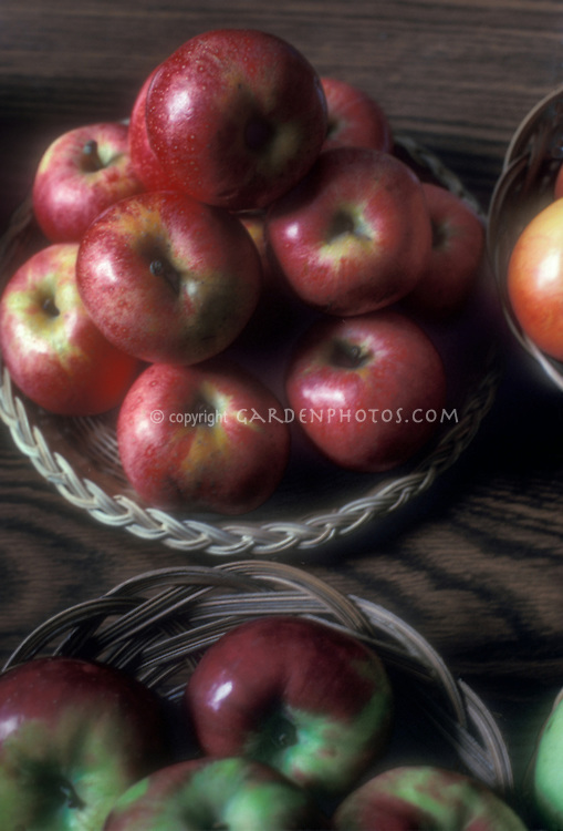 Apples. Malus domestica fruit apple ripe picked in baskets on table