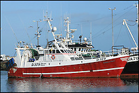 BNPS.co.uk (01202 558833).Pic: DeclanMacgabhann/BNPS..Deadliest catch - The Dublin based trawler Eblana...Scorpion fish are the deadliest species of fish in the world and is normally native to the warm waters of the Mediterranean and not the cold waters of the UK...Skipper of the Eblana Brendan spotted the bright coral-colored fish in his net trawled from a depth of100m off Waterford last month. ..Wary of its deadly spines, Brendan carefully placed it in a separate holding tank. And called Declan MacGabhann of the Sea Fisheries Protection Authority...Declan said 'This is only Scorpaena scrofa fish ever caught in the waters around the British Isles since records began in the 19th century. There have been a handful of reports of its smaller cousin Scorpaena porcus but very rarely. the seas are definately getting warmer and we can expect more of these exotic species to appear'...The unique specimen is now the star exhibit at the Dingle Oceanworld Aquarium.