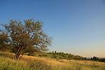 Israel, Upper Galilee, scenery by Road 918 Gonen-Gadot