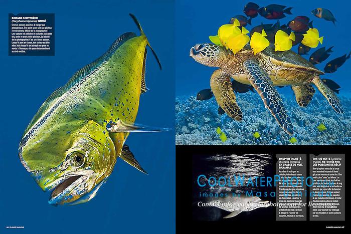 Plongée Magazine, December 2013, Photographer Portfolio, France, Image ID: Mahi-Mahi-Dolphinfish-Dorado-0028-V, Green-Sea-Turtle-0097, Spotted-Dolphin-Atlantic-0004
