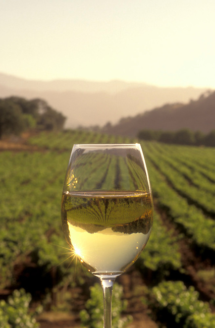 Chardonnay glass in vineyard