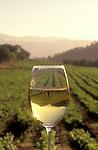 Chardonnay glass in vineyard