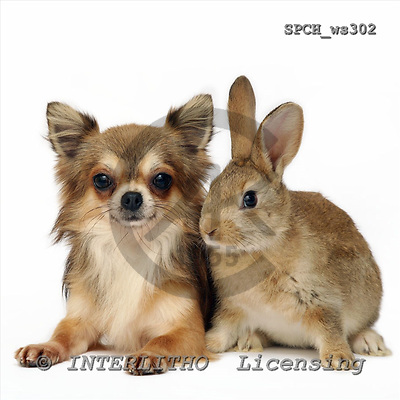 Xavier, ANIMALS, fondless, photos, SPCHWS302,#A#