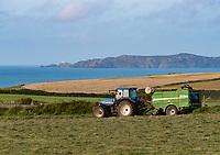 Big baling grass silage, Ynys Barry, Porthgain, Pembrokeshire, Dyfed, Wales, United Kingdom.