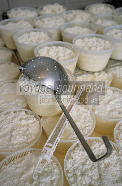 Europe/France/Corse/2A/Corse-du-Sud/Bastelicaccia: Mr Mathieu Bernardi, Berger et producteur de fromage de brebis l prépare le Brocciu traditionnel