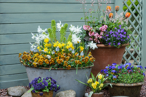 Spring Containers with Bulbs - Bob Purnell (4th April 2014)