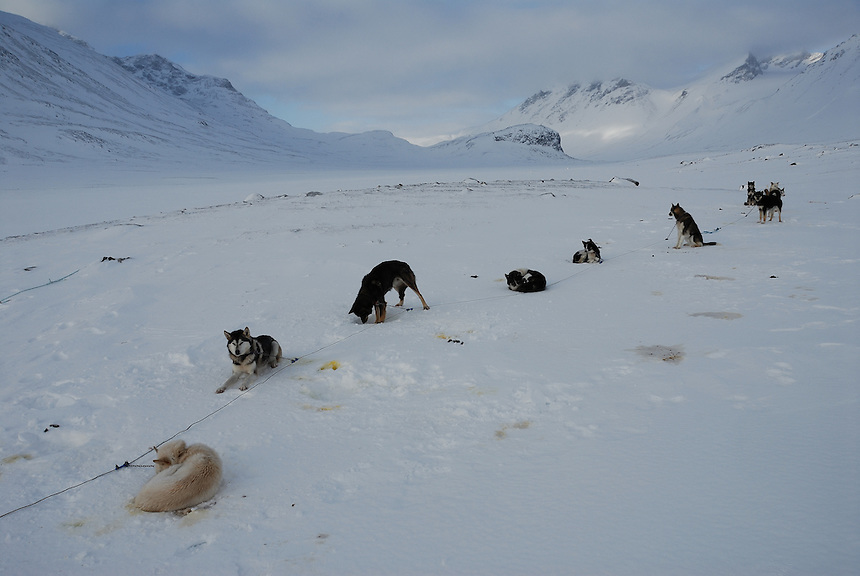 Slegde dogs in Sarek,Sweden