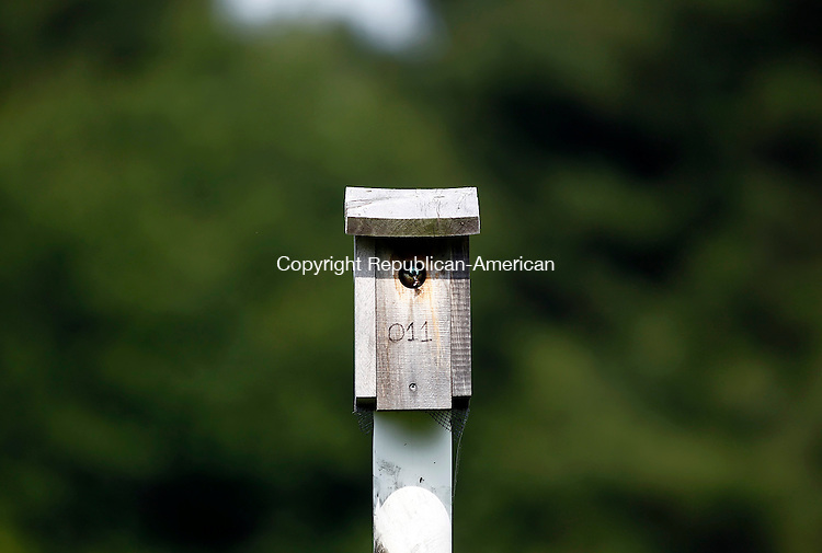 Litchfield, CT- 17 June 2014-061714CM10- COUNTRY LIFE BANNERS A Swallow  snacks on a bug at White Memorial in Litchfield on Tuesday.  Christopher Massa Republican-American