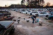Deborah McCrea feeds a band of feral cats that live at Wagner's Auto Salvage in Durham, Friday, Jan. 4, 2012.