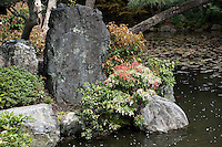 A cluster of small trees amongst the rocks beside the pond at Shosei-en garden, Kyoto